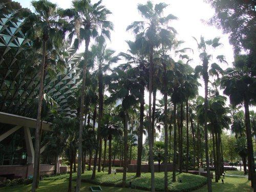 Прекрасният парк около Esplanade