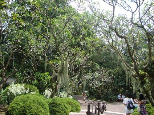 Вековни дървета в Ботаническата градина