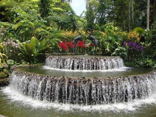 В Националната градина на орхидеите