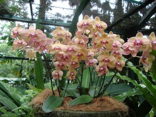 Павилиона на ВИП орхидеите