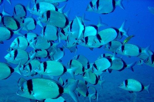 Под вода