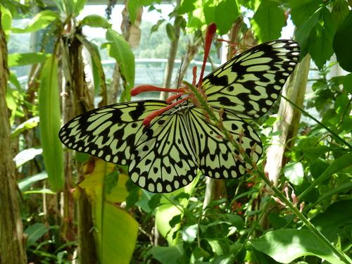 Тайпе, зоопарка, пеперуда