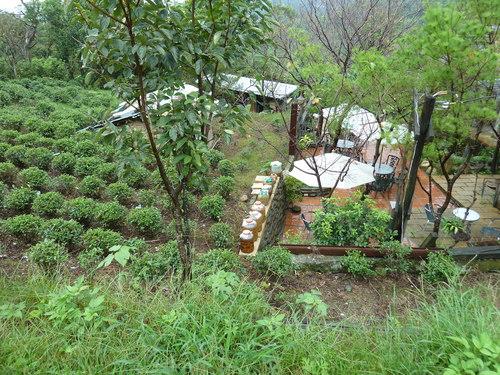 Тайпе, Маоконг, чаена плантация
