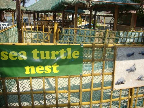Гнездото на морските костенурки