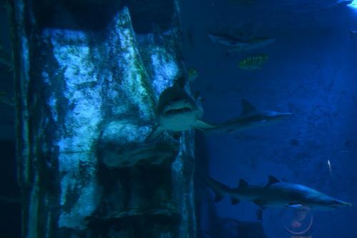 Лондон, акули в Аквариума