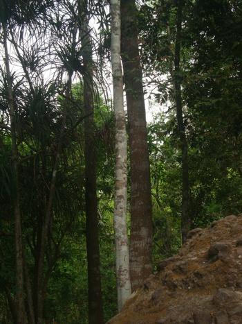 Филипини, високият етаж на джунглата