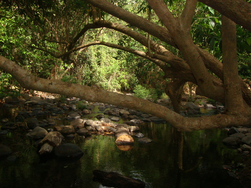 Филипини, кът от джунглата