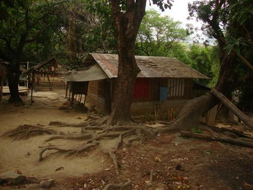 корените са оголени от обилните дъждове