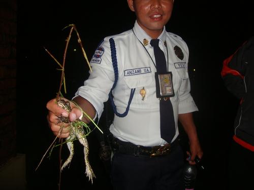 жаба бик в ръката на охраната