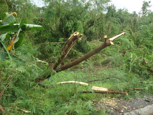 След тайфуна Гленда