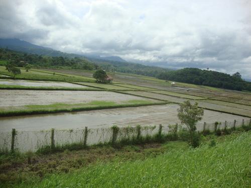 Филипините, оризови ниви по пътя за Ангелес