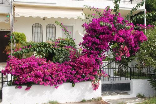 Гърция, Пидима Кирас
