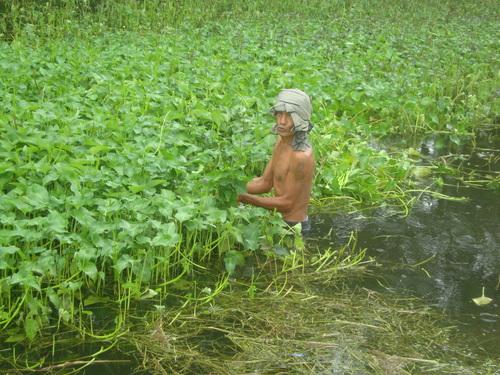 филипинец си бере кангконг от изкуствен канал