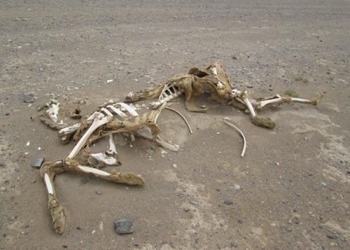 Минах и покрай скелет на камила в пустинята