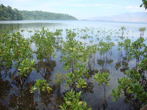 мангрова растителност
