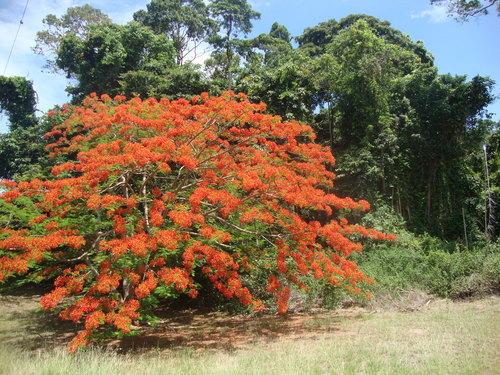 дали капре би харесал това дърво...