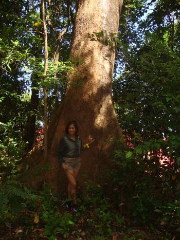 Агнес пред бял лауан – предпочитано от капре дърво