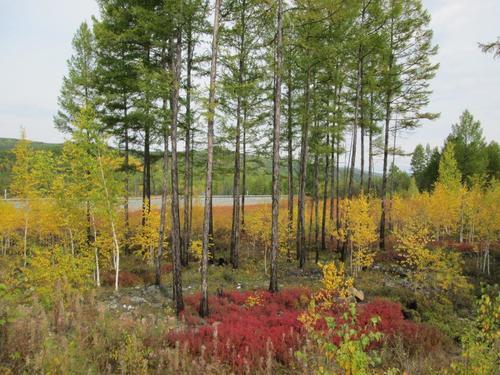 Природата в Източен Сибир в началото на септември